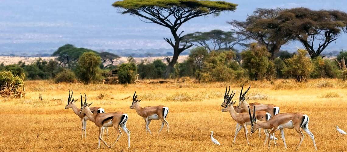 Kibale Forest   Queen Elizabeth   Bwindi Forest